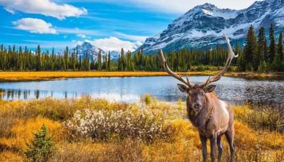 《极地天然西洋参,来自加拿大的天赋好礼》